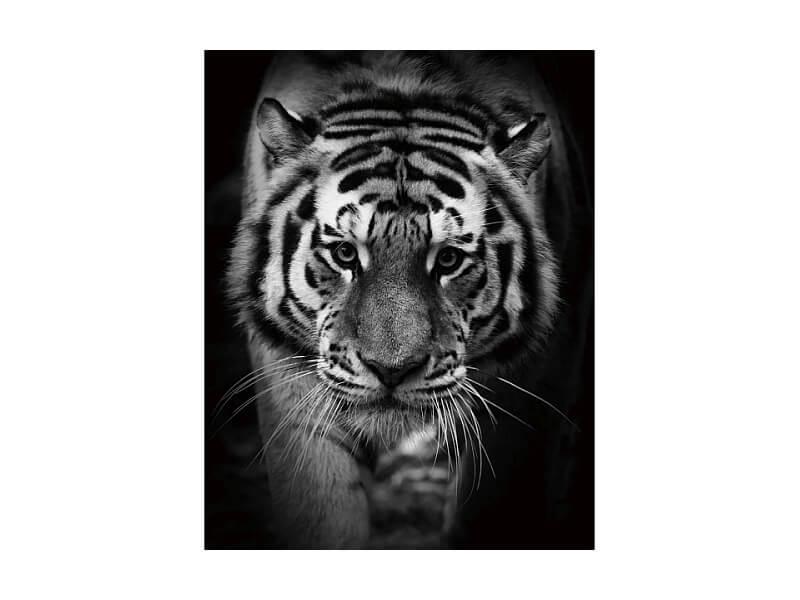 https://www.excluzive.se/wp-content/uploads/2020/09/Tiger.jpg